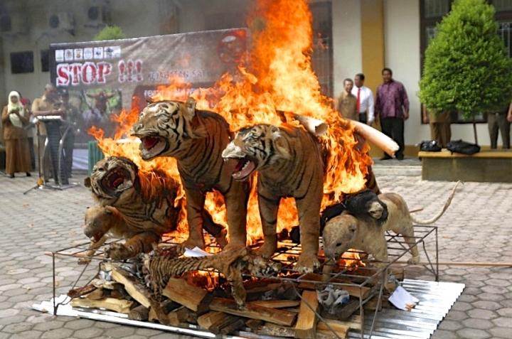 """Leonardo di Caprio Mem-Post Video """"Harimau"""" Indonesia Dibakar, Dan Kami Dukung 100%!"""