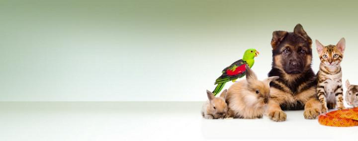 Mengenal Lebih Dekat dengan Program Studi Kedokteran Hewan