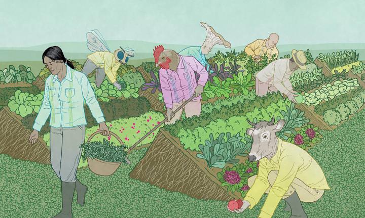 Suka Duka Mahasiswa yang Kuliah di Bidang Pertanian